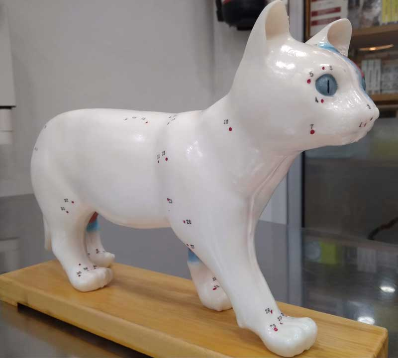 acupuntura-veterinaria-en-Barcelona-02