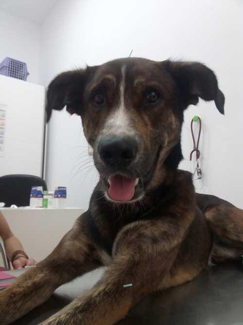 acupuntura-veterinaria-en-Barcelona-aguja-seca