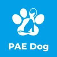 centro-de-entrenamiento-para-perros-PAE-Dog