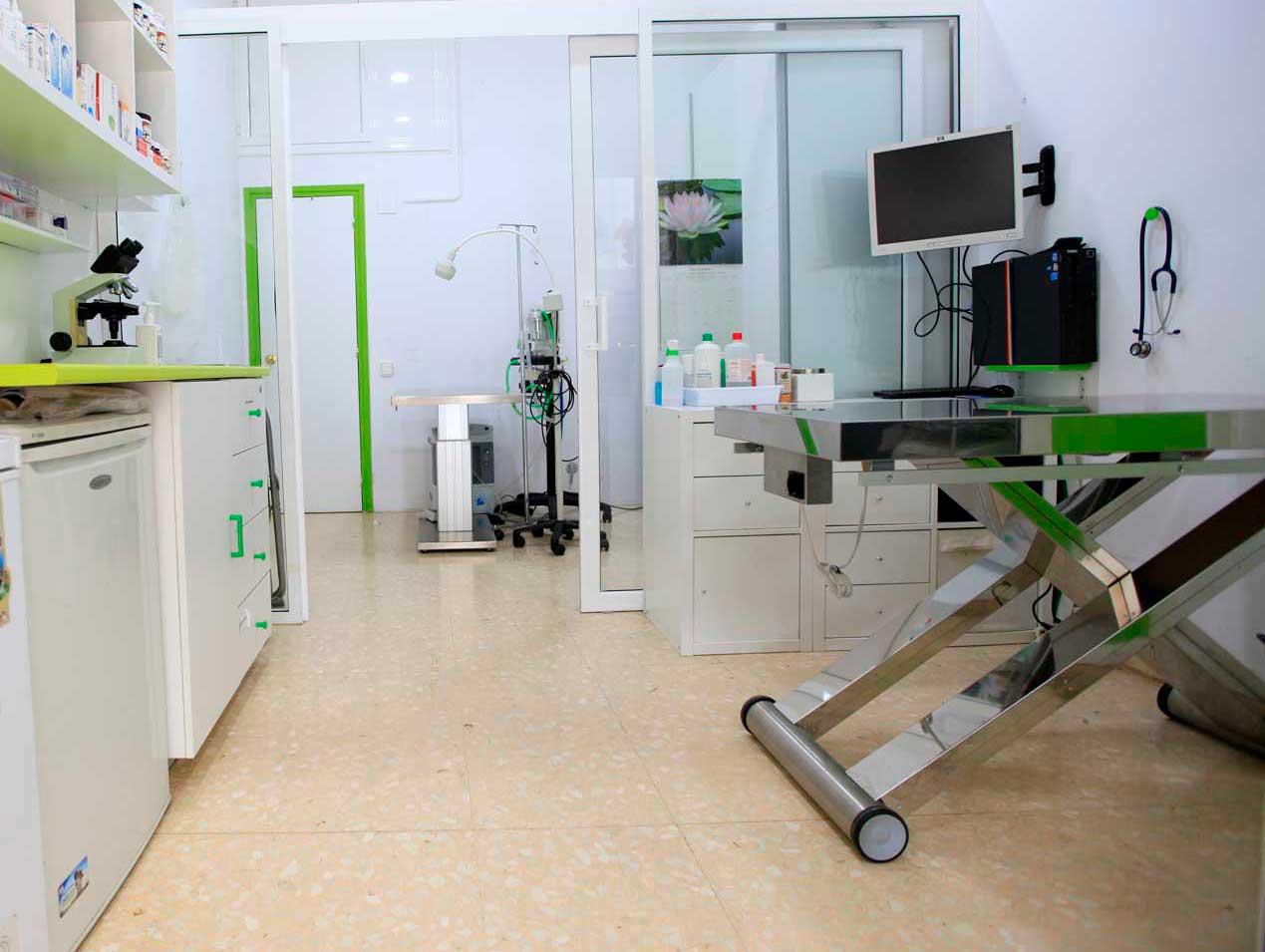 cirugía-veterinaria-en-Barcelona-Gran-Via