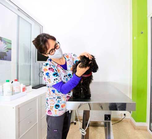 higiene-bucal-para-perros-y-gatos-en-Barcelona