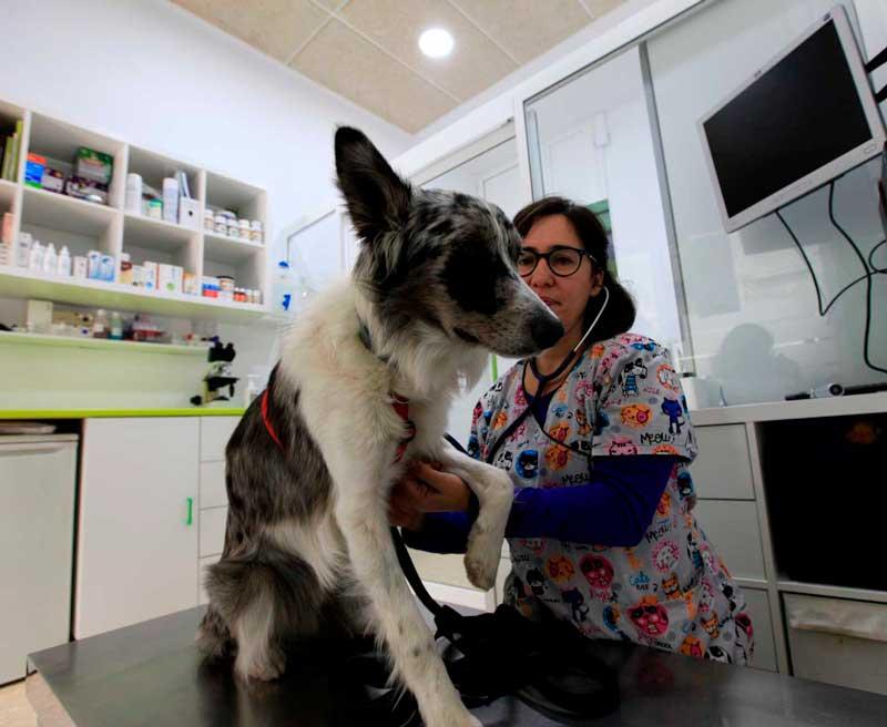 medicina-general-para-mascotas-en-veterinaria-Barcelona