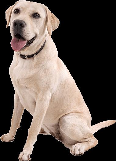 medicina-preventiva-mascotas-en-clinica-veterinaria-Barcelona
