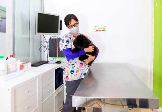 medicina-veterinaria-preventiva-con-planes-de-salud-en-Barcelona