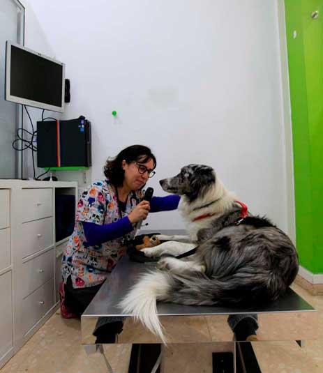 oftalmología veterinaria en Barcelona