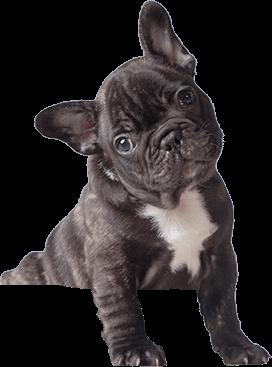 perro-veterinaria-barcelona-2.png