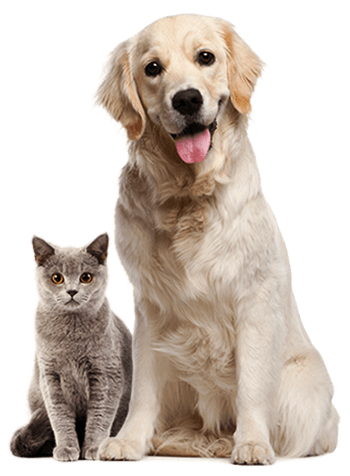 perro y gato en servicios veterinarios en Barcelona