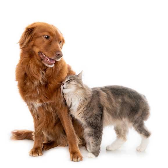 planes-de-salud-para-perros-y-gatos-en-veterinaria-Barcelona