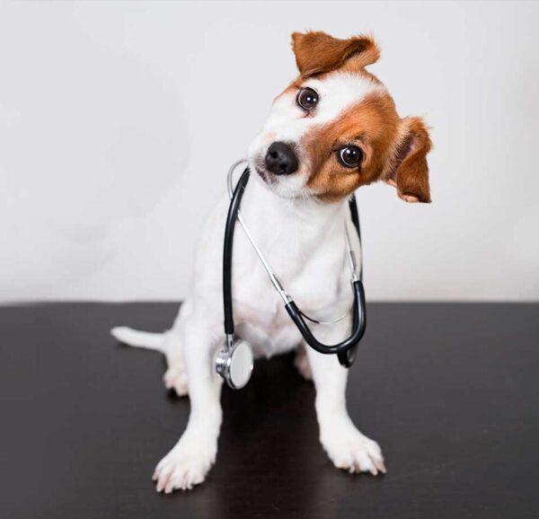 vacunación-de-mascotas-en-clínica-veterinaria-Barcelona