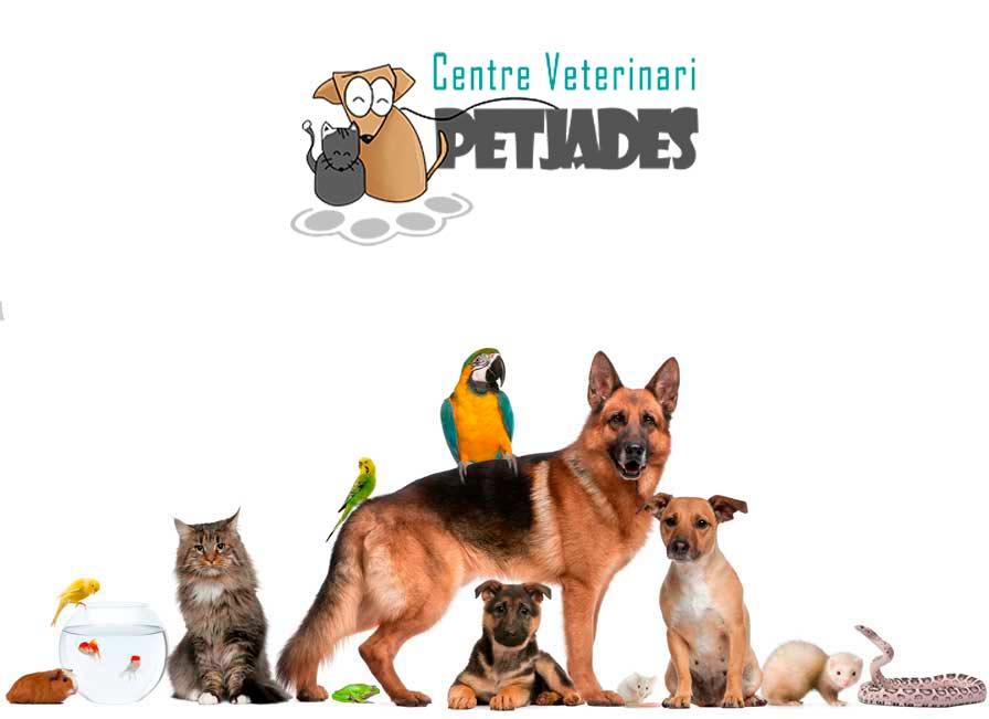 veterinaria-para-animales-exóticos-en-Barcelona-clínica-gran-vía